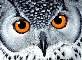 thekingowl
